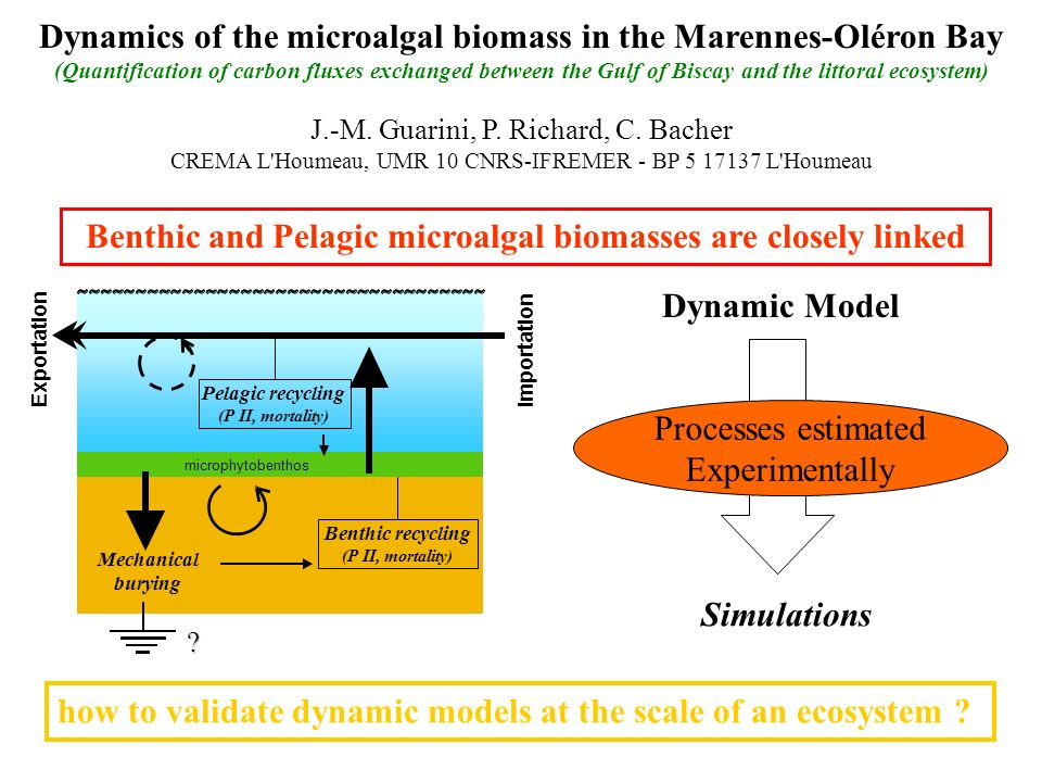 Benthic and Pelagic microalgal biomasses are closely linked Dynamics of the microalgal biomass in the Marennes-Oléron Bay (Quantification of carbon fl