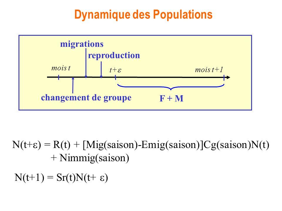 Dynamique des Populations N(t+ ) = R(t) + [Mig(saison)-Emig(saison)]Cg(saison)N(t) + Nimmig(saison) N(t+1) = Sr(t)N(t+ ) reproduction mois t mois t+1 migrations changement de groupe F + M t+