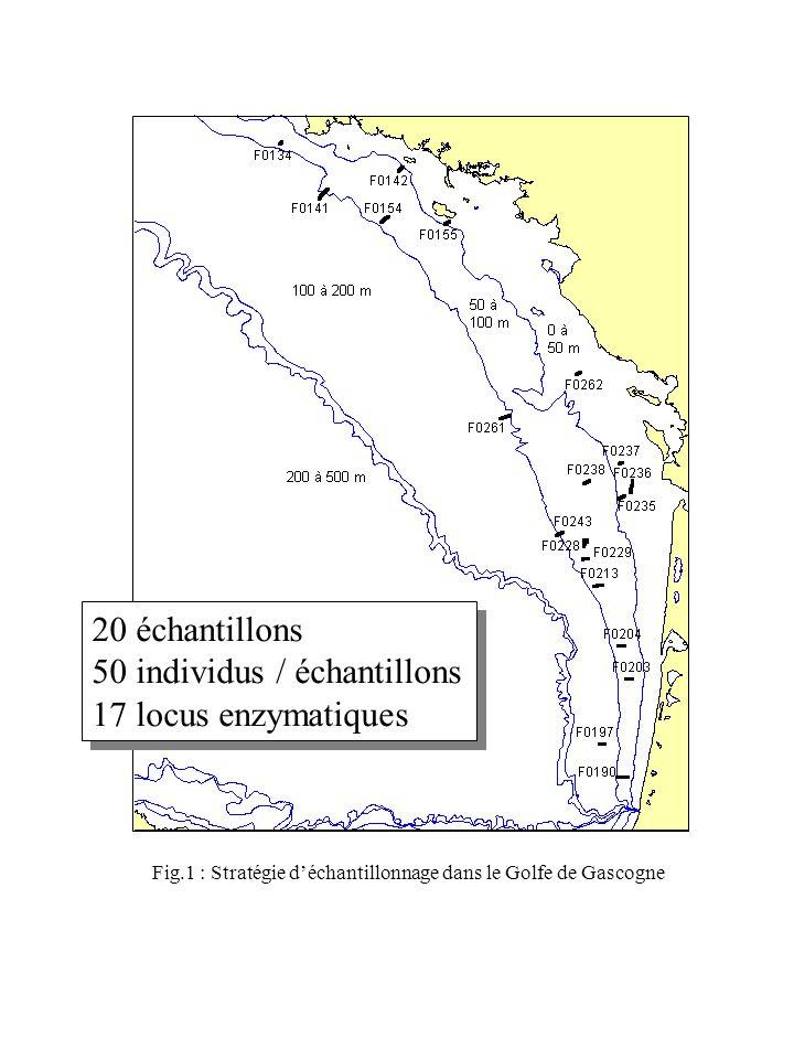 20 échantillons 50 individus / échantillons 17 locus enzymatiques 20 échantillons 50 individus / échantillons 17 locus enzymatiques Fig.1 : Stratégie déchantillonnage dans le Golfe de Gascogne