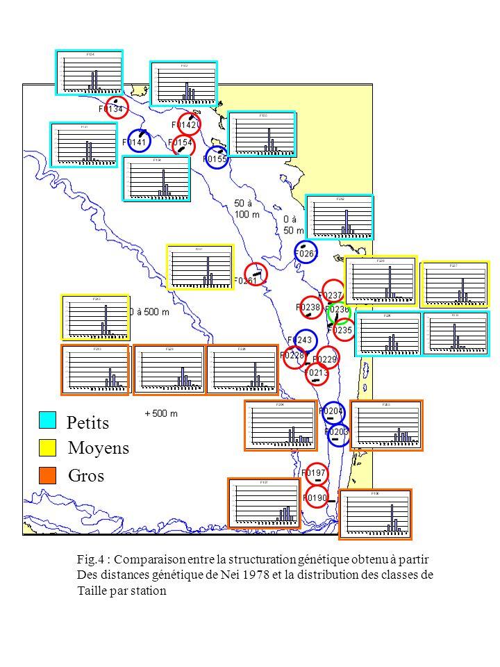 Petits Moyens Gros Fig.4 : Comparaison entre la structuration génétique obtenu à partir Des distances génétique de Nei 1978 et la distribution des classes de Taille par station