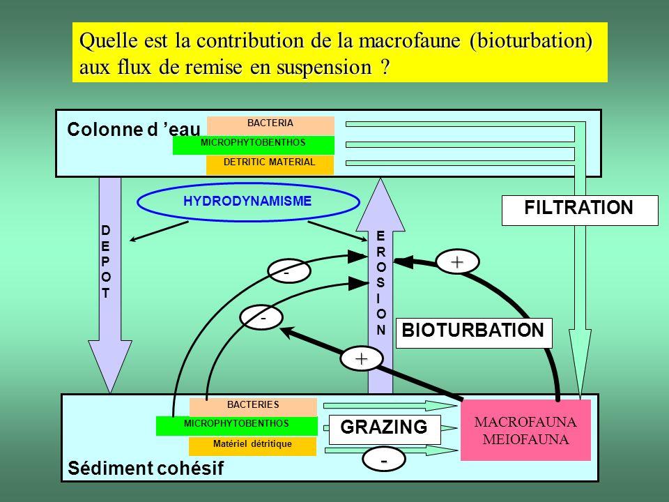 MICROPHYTOBENTHOS BACTERIES Sédiment cohésif MACROFAUNA MEIOFAUNA HYDRODYNAMISME DEPOTDEPOT EROSIONEROSION - - + MICROPHYTOBENTHOS BACTERIA Matériel d