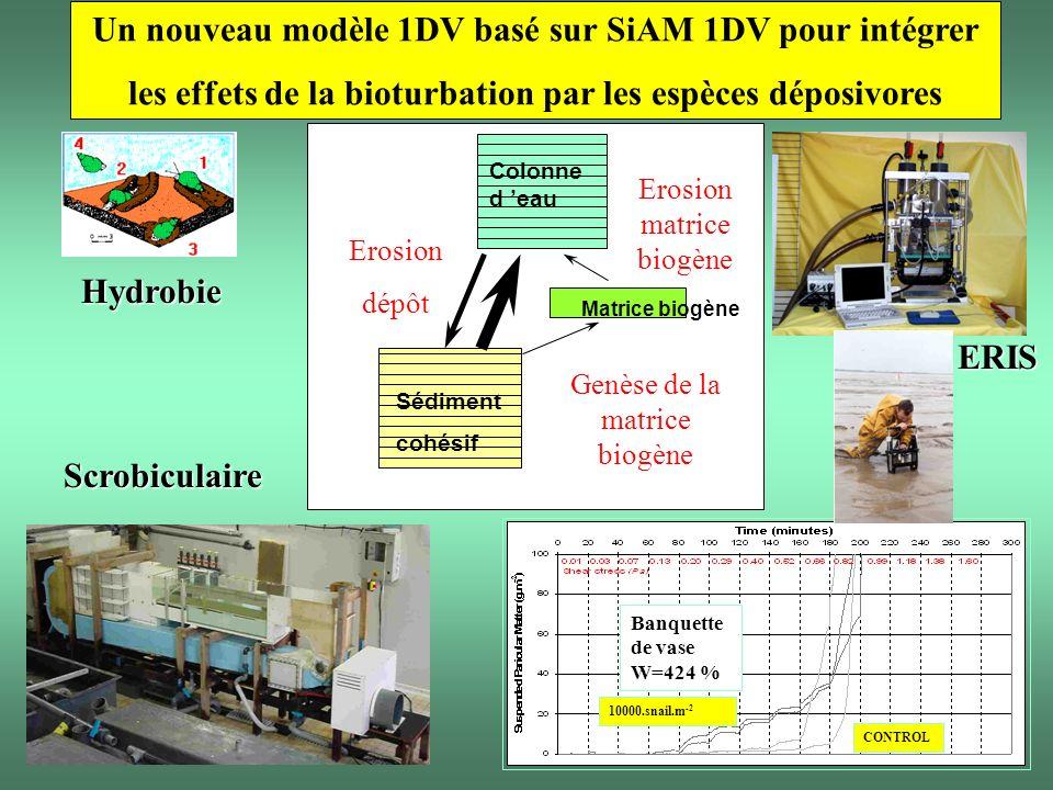 Un nouveau modèle 1DV basé sur SiAM 1DV pour intégrer les effets de la bioturbation par les espèces déposivores Matrice biogène Colonne d eau Sédiment