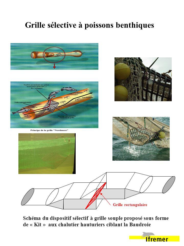 Grille rectangulaire Grille sélective à poissons benthiques Schéma du dispositif sélectif à grille souple proposé sous forme de « Kit » aux chalutier