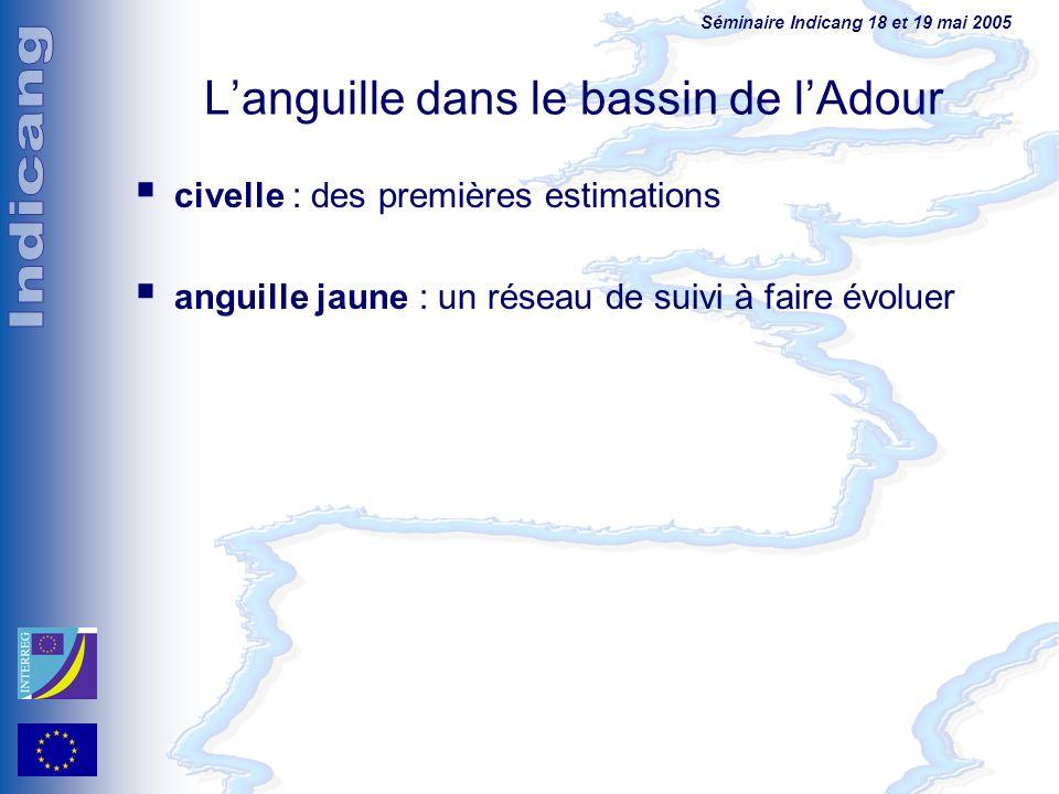 Séminaire Indicang 18 et 19 mai 2005 Languille dans le bassin de lAdour civelle : des premières estimations anguille jaune : un réseau de suivi à fair