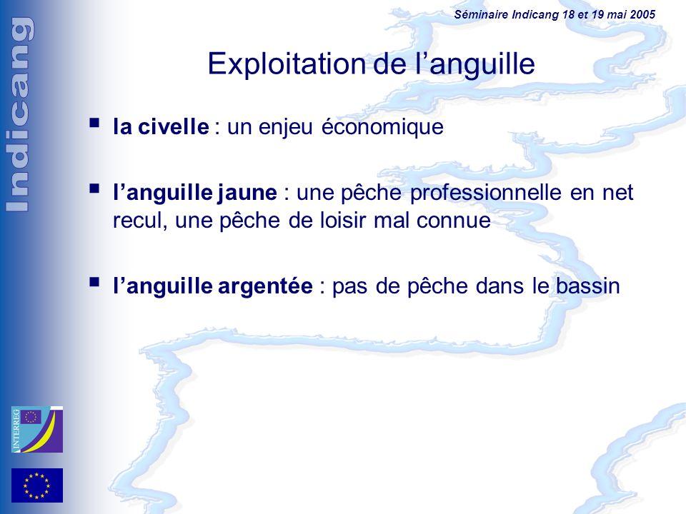 Séminaire Indicang 18 et 19 mai 2005 Exploitation de languille la civelle : un enjeu économique languille jaune : une pêche professionnelle en net rec