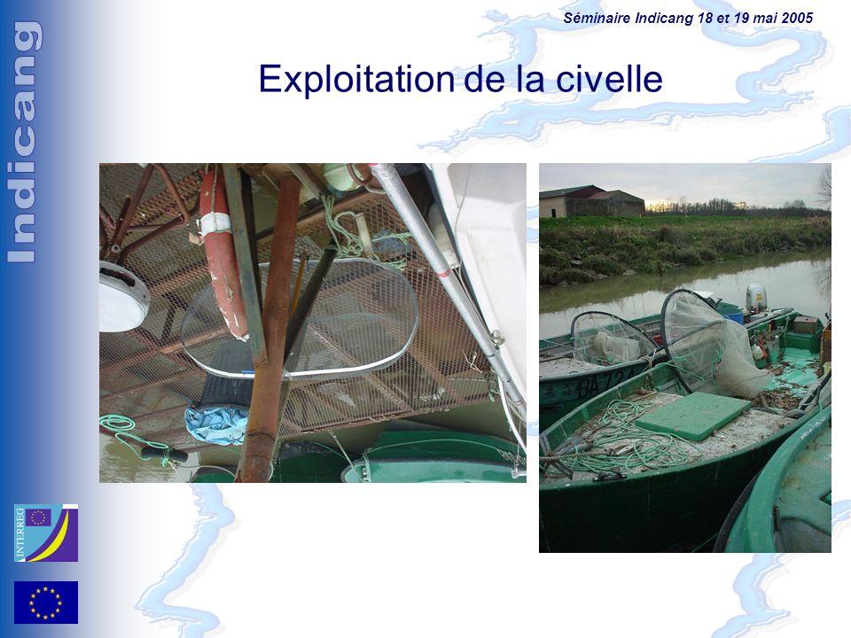 Séminaire Indicang 18 et 19 mai 2005 Exploitation de la civelle