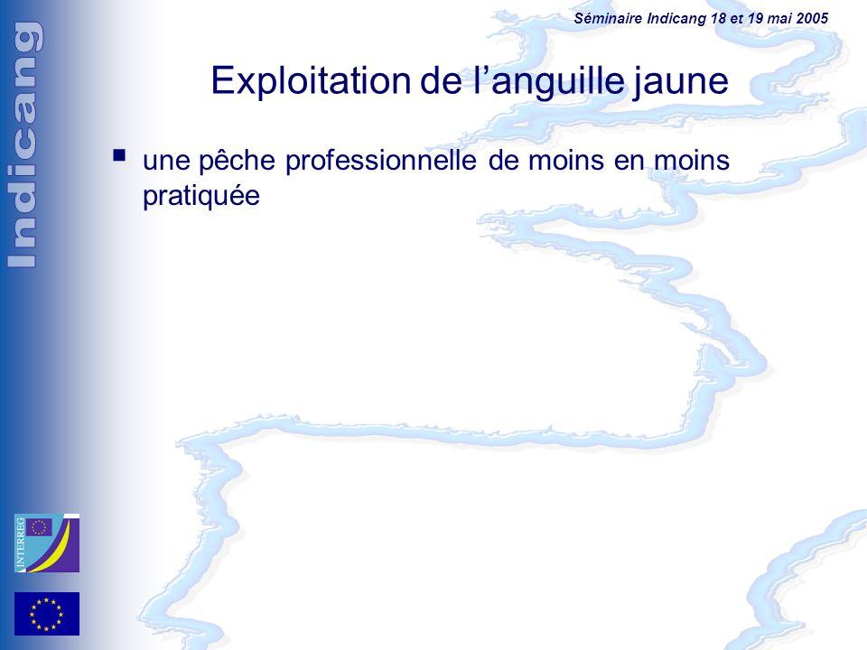 Séminaire Indicang 18 et 19 mai 2005 Exploitation de languille jaune une pêche professionnelle de moins en moins pratiquée