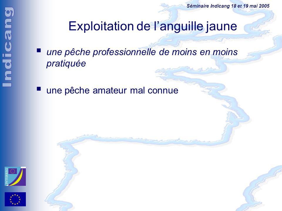 Séminaire Indicang 18 et 19 mai 2005 Exploitation de languille jaune une pêche professionnelle de moins en moins pratiquée une pêche amateur mal connu