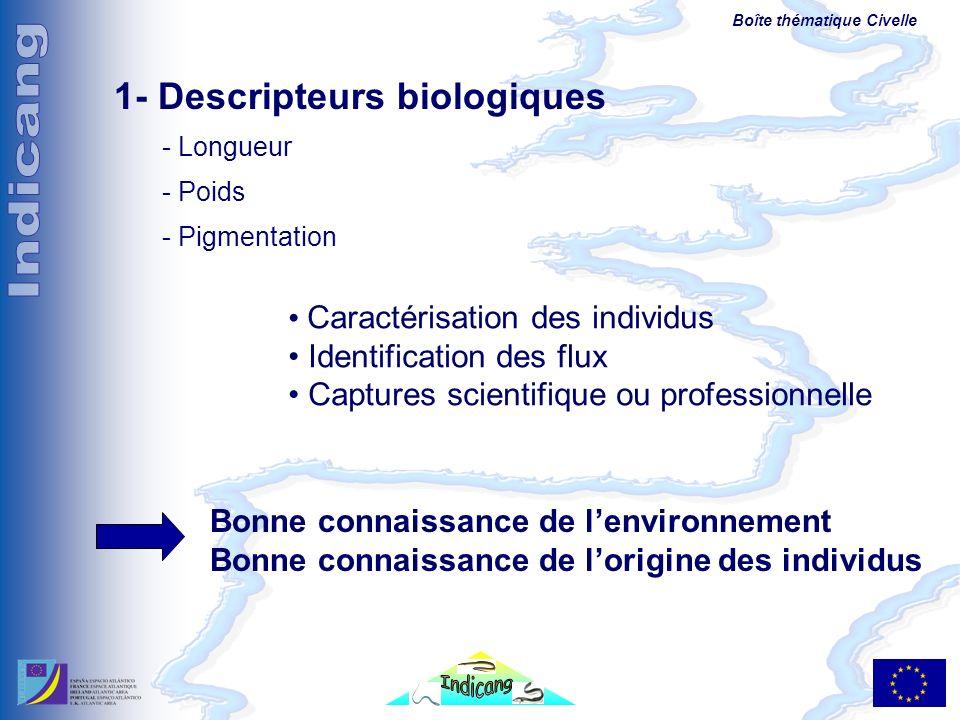 Boîte thématique Civelle 1- Descripteurs biologiques - Longueur - Poids - Pigmentation Caractérisation des individus Identification des flux Captures