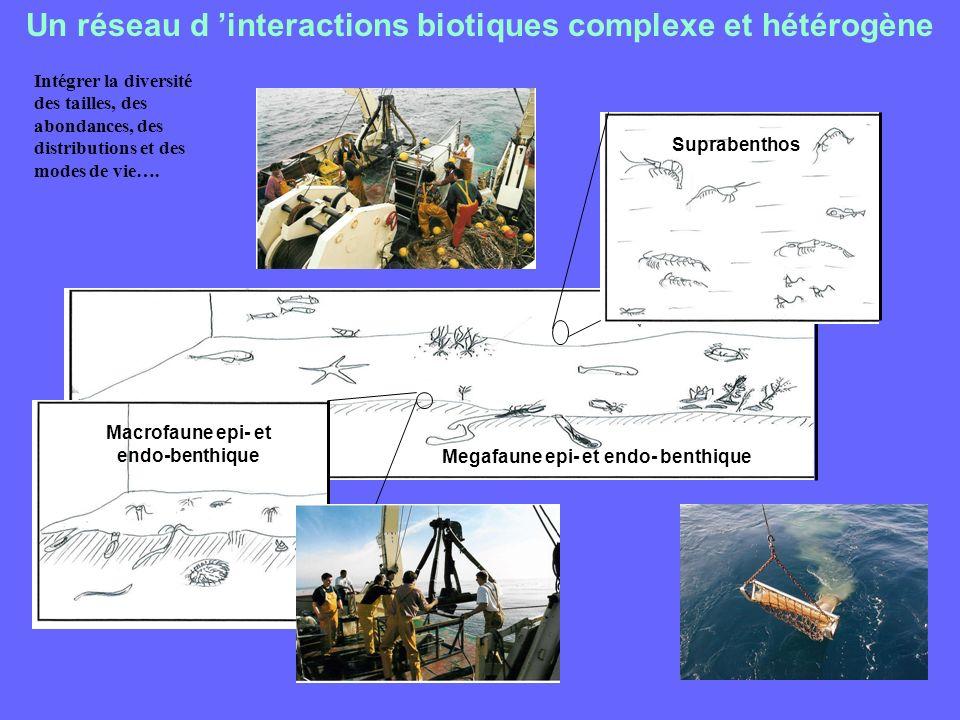 Un réseau d interactions biotiques complexe et hétérogène Intégrer la diversité des tailles, des abondances, des distributions et des modes de vie…. M