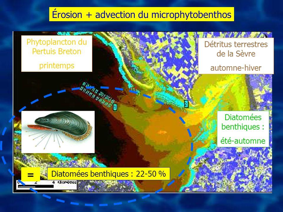 Diatomées benthiques : 22-50 % Détritus terrestres de la Sèvre automne-hiver Phytoplancton du Pertuis Breton printemps Diatomées benthiques : été-auto