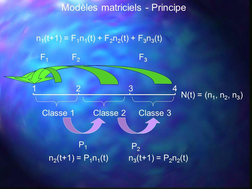 1234 Classe 1Classe 2Classe 3 P1P1 F3F3 F2F2 P2P2 F1F1 N(t) = (n 1, n 2, n 3 ) n 1 (t+1) = F 1 n 1 (t) + F 2 n 2 (t) + F 3 n 3 (t) n 2 (t+1) = P 1 n 1