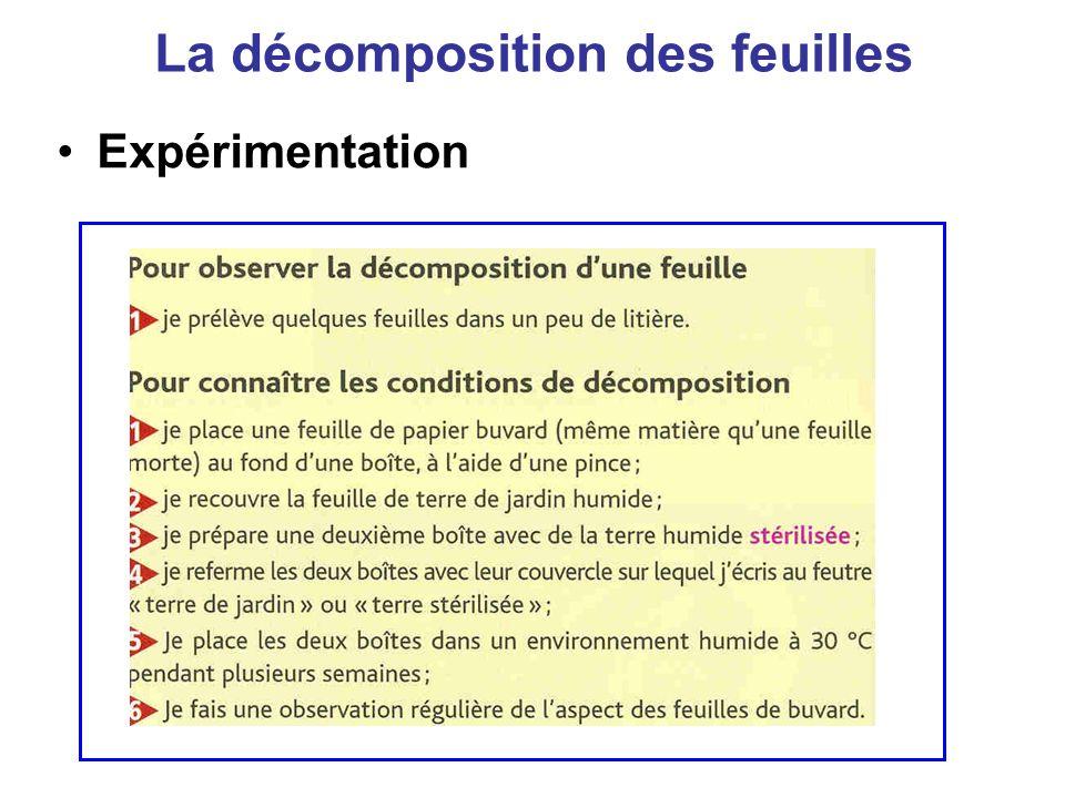 La décomposition des feuilles Expérimentation