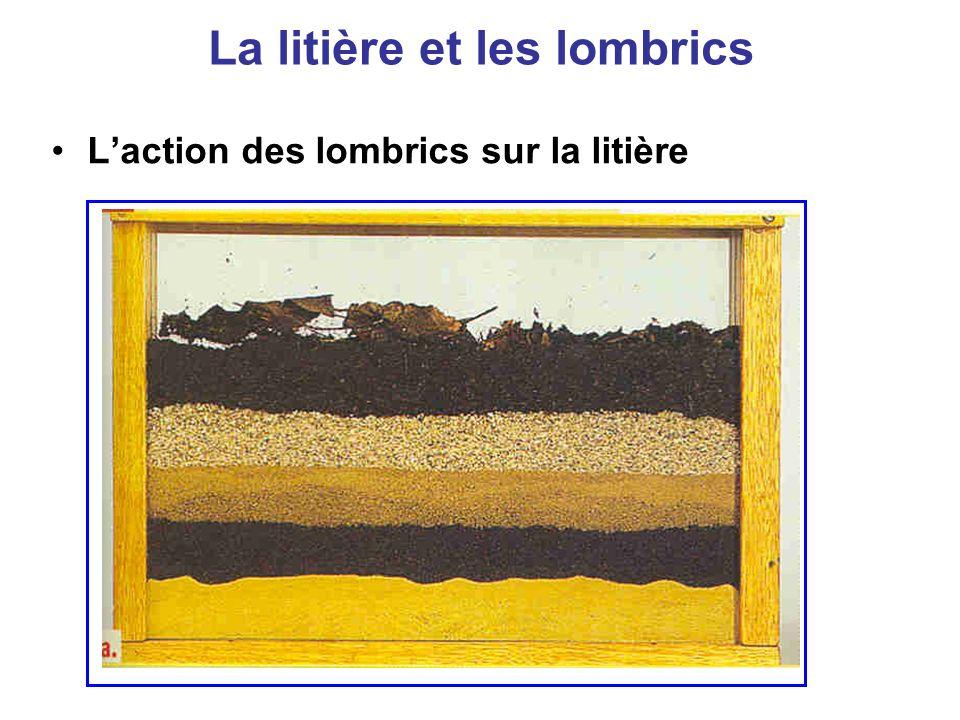 La litière et les lombrics Laction des lombrics sur la litière