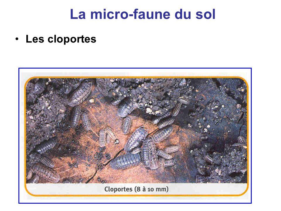 La micro-faune du sol Les cloportes