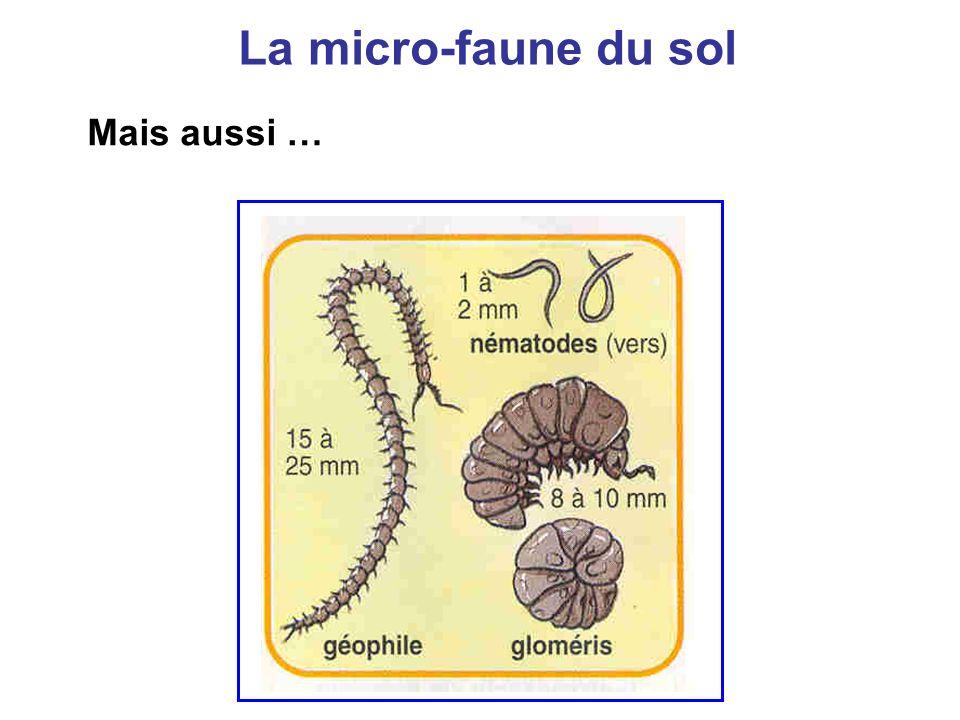 La micro-faune du sol Mais aussi …