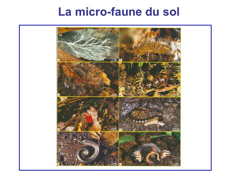 La micro-faune du sol
