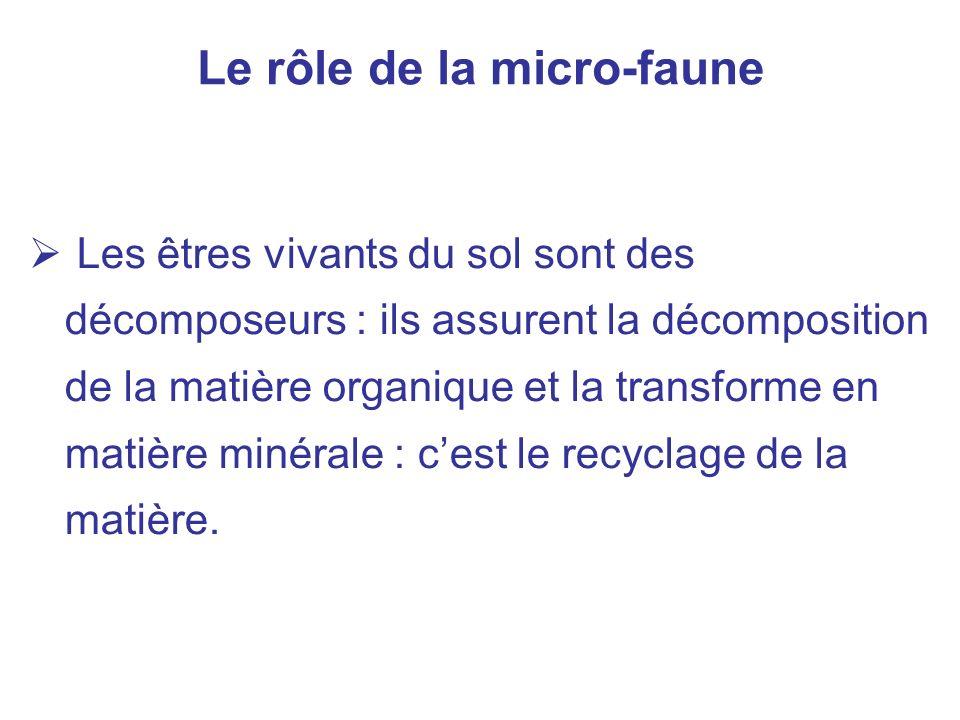 Le rôle de la micro-faune Les êtres vivants du sol sont des décomposeurs : ils assurent la décomposition de la matière organique et la transforme en m