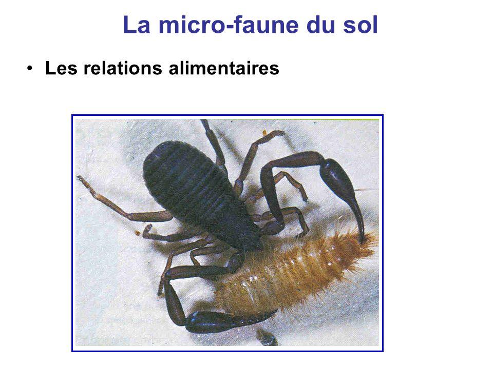 La micro-faune du sol Les relations alimentaires