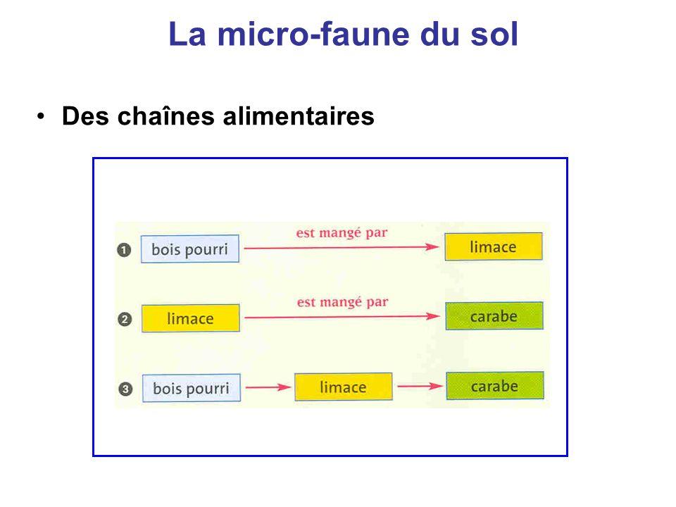 La micro-faune du sol Des chaînes alimentaires