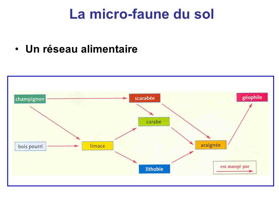 La micro-faune du sol Un réseau alimentaire