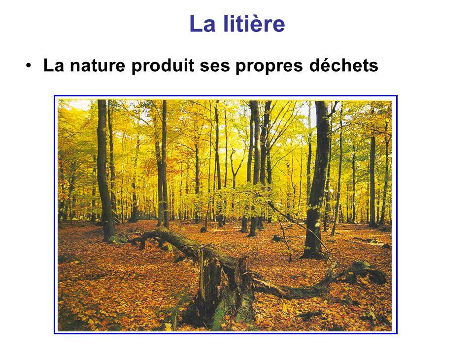 Les déchets de la nature Problème : La forêt produit chaque année une masse considérable de déchets sous forme de feuilles et de branches mortes.