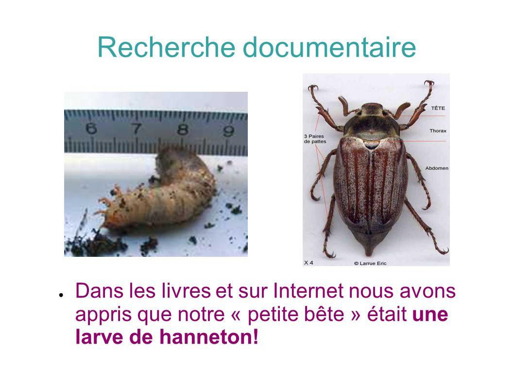 Recherche documentaire Dans les livres et sur Internet nous avons appris que notre « petite bête » était une larve de hanneton!