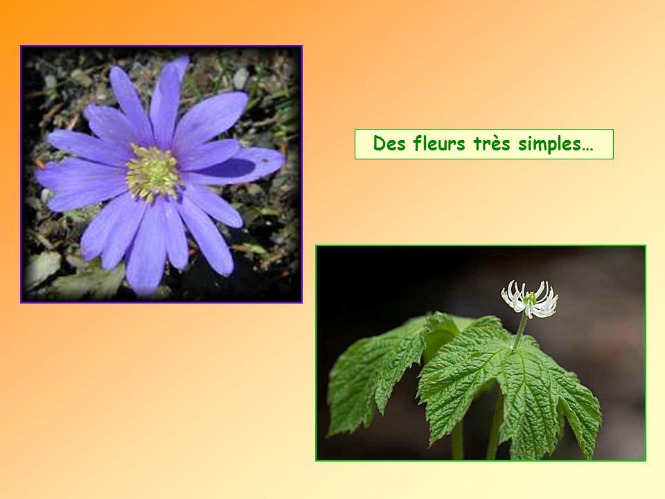 Des fleurs très simples…