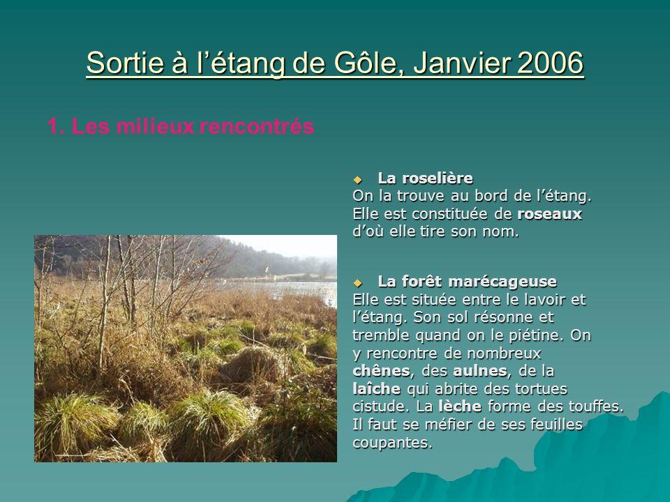Sortie à létang de Gôle, Janvier 2006 La roselière La roselière On la trouve au bord de létang. Elle est constituée de roseaux doù elle tire son nom.