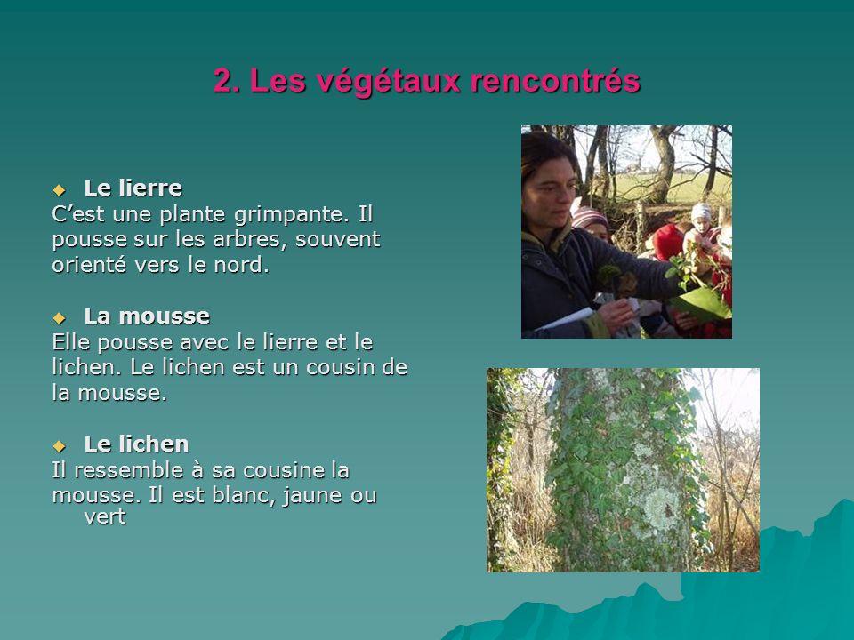 2. Les végétaux rencontrés Le lierre Le lierre Cest une plante grimpante. Il pousse sur les arbres, souvent orienté vers le nord. La mousse La mousse