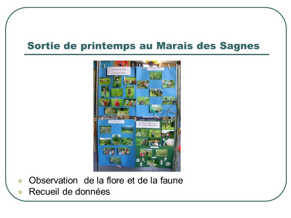 Sortie de printemps au Marais des Sagnes Observation de la flore et de la faune Recueil de données