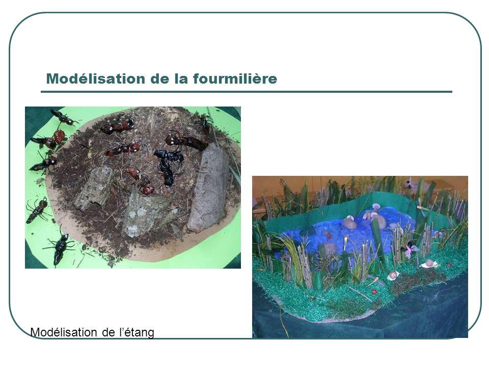 Modélisation de la fourmilière Modélisation de létang