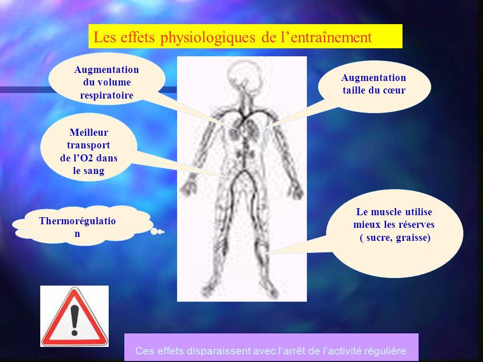 Les effets physiologiques de lentraînement Augmentation du volume respiratoire Augmentation taille du cœur Meilleur transport de lO2 dans le sang Le m
