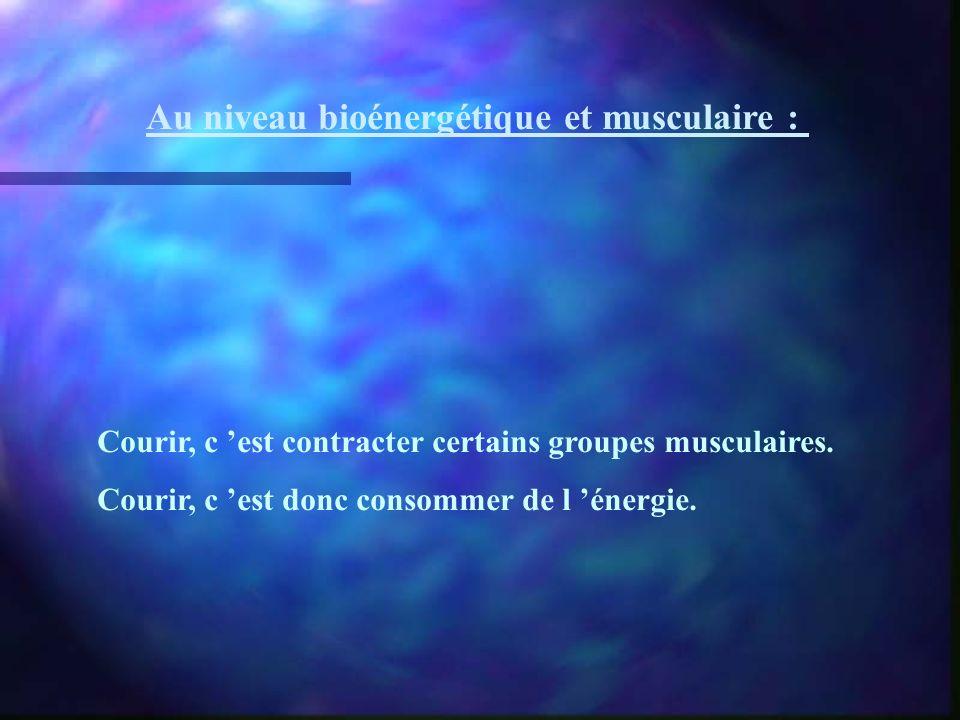 Au niveau bioénergétique et musculaire : Courir, c est contracter certains groupes musculaires. Courir, c est donc consommer de l énergie.