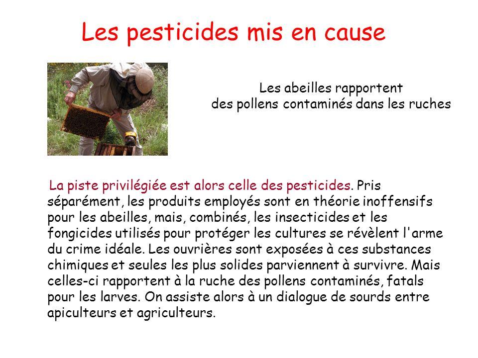 Les pesticides mis en cause La piste privilégiée est alors celle des pesticides. Pris séparément, les produits employés sont en théorie inoffensifs po