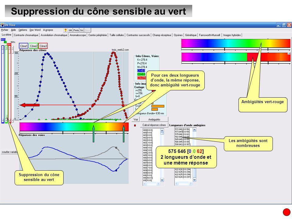 Suppression du cône sensible au vert Les ambigüités sont nombreuses Ambigüités vert-rouge Pour ces deux longueurs donde, la même réponse, donc ambigüi