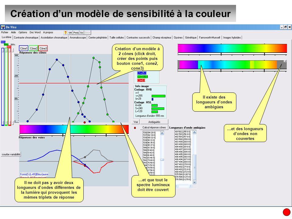 Création dun modèle de sensibilité à la couleur En déplaçant les points de façon à couvrir tout le spectre et en faisant chevaucher les sensibilités, on élimine toutes les ambigüités Donc la vision des couleurs est possible avec seulement 2 cônes.