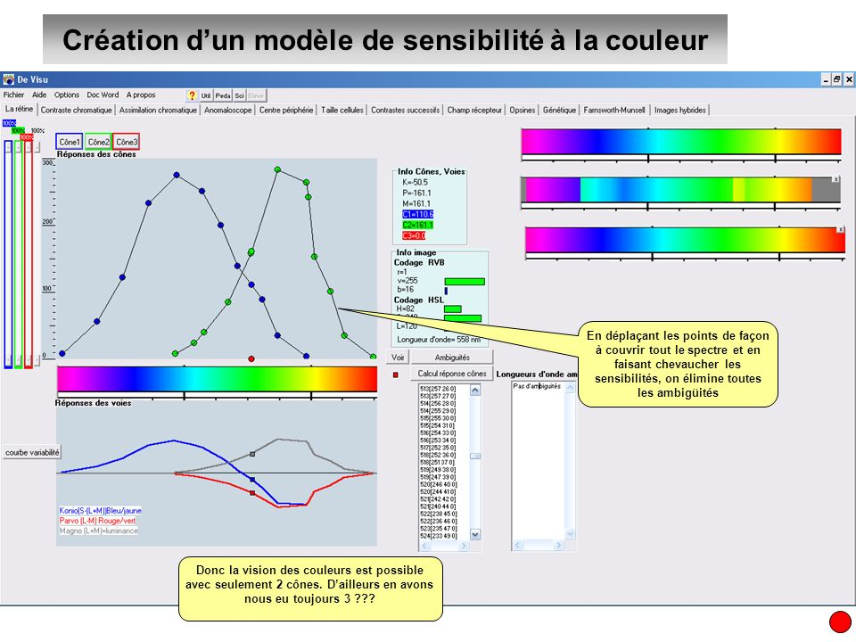 Création dun modèle de sensibilité à la couleur En déplaçant les points de façon à couvrir tout le spectre et en faisant chevaucher les sensibilités,