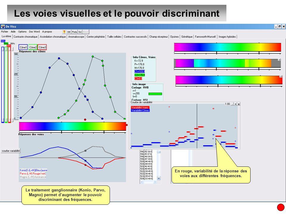 Les voies visuelles et le pouvoir discriminant Le traitement ganglionnaire (Konio, Parvo, Magno) permet daugmenter le pouvoir discriminant des fréquen