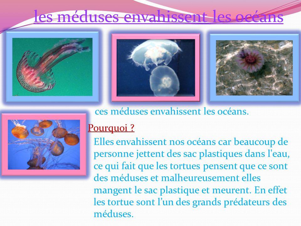 ces méduses envahissent les océans.Pourquoi .