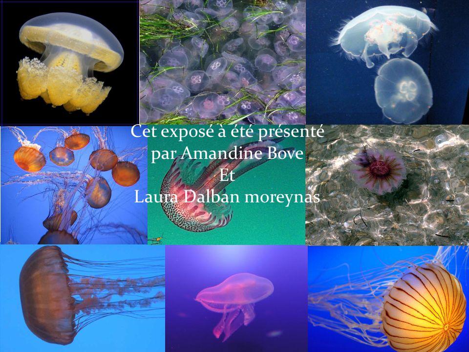 Cet exposé à été présenté par Amandine Bove Et Laura Dalban moreynas