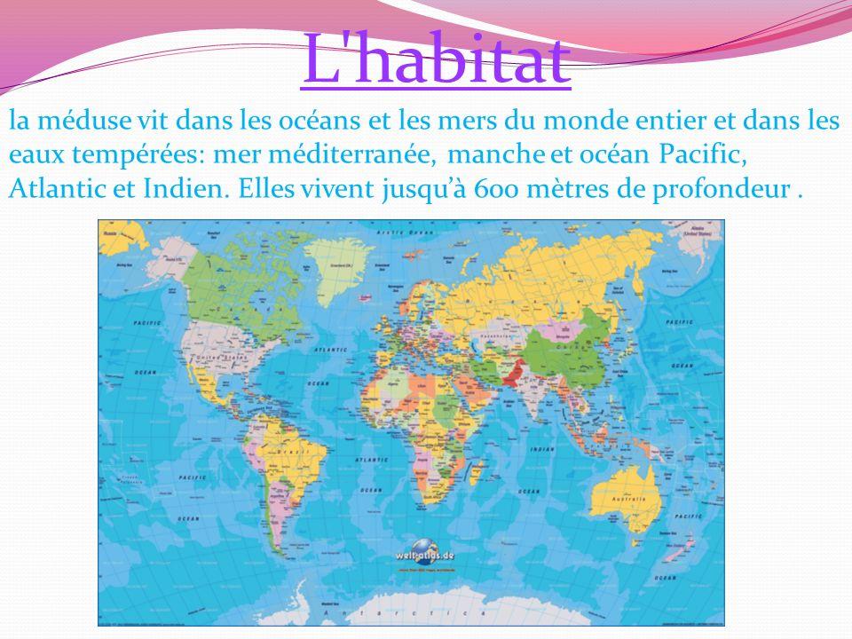 L habitat la méduse vit dans les océans et les mers du monde entier et dans les eaux tempérées: mer méditerranée, manche et océan Pacific, Atlantic et Indien.