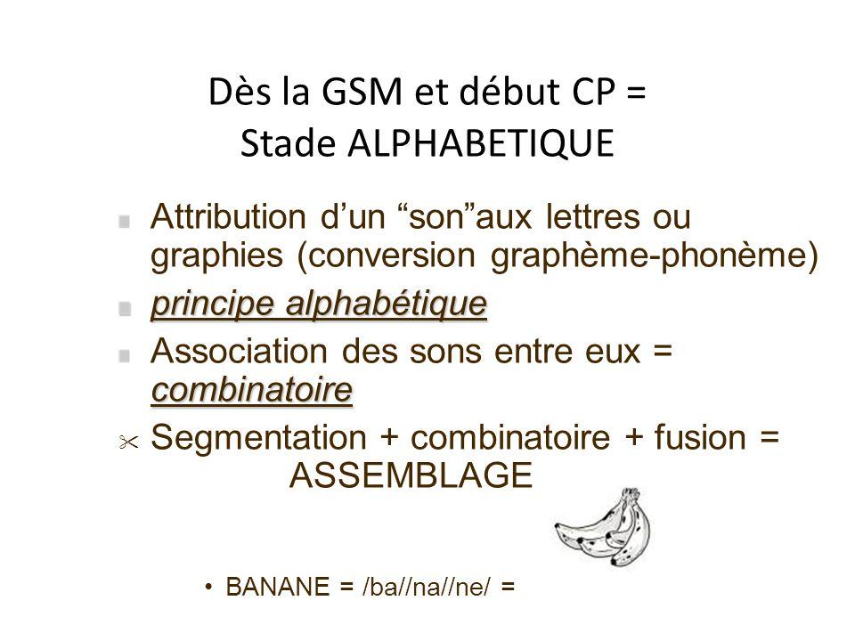 Dès la GSM et début CP = Stade ALPHABETIQUE Attribution dun sonaux lettres ou graphies (conversion graphème-phonème) principe alphabétique combinatoir