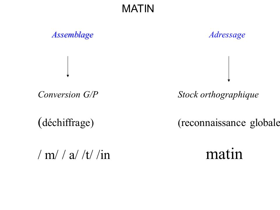 MATIN Assemblage Assemblage Adressage Conversion G/P Stock orthographique ( déchiffrage)(reconnaissance globale) / m/ / a/ /t/ /in matin