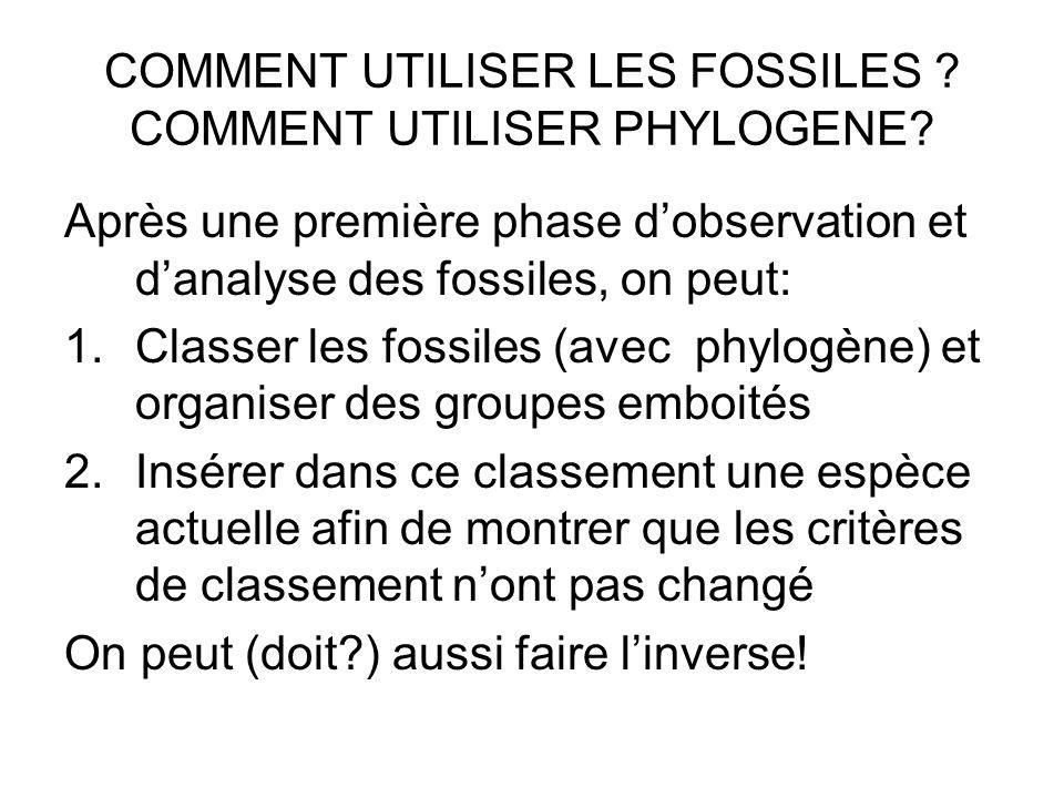 COMMENT UTILISER LES FOSSILES ? COMMENT UTILISER PHYLOGENE? Après une première phase dobservation et danalyse des fossiles, on peut: 1.Classer les fos