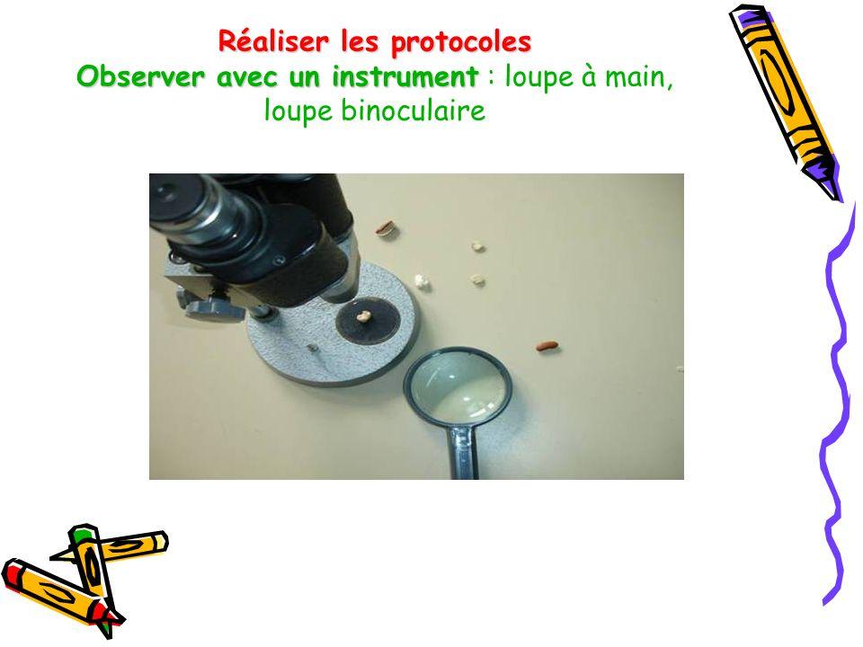 Réaliser les protocoles Observer avec un instrument Réaliser les protocoles Observer avec un instrument : loupe à main, loupe binoculaire