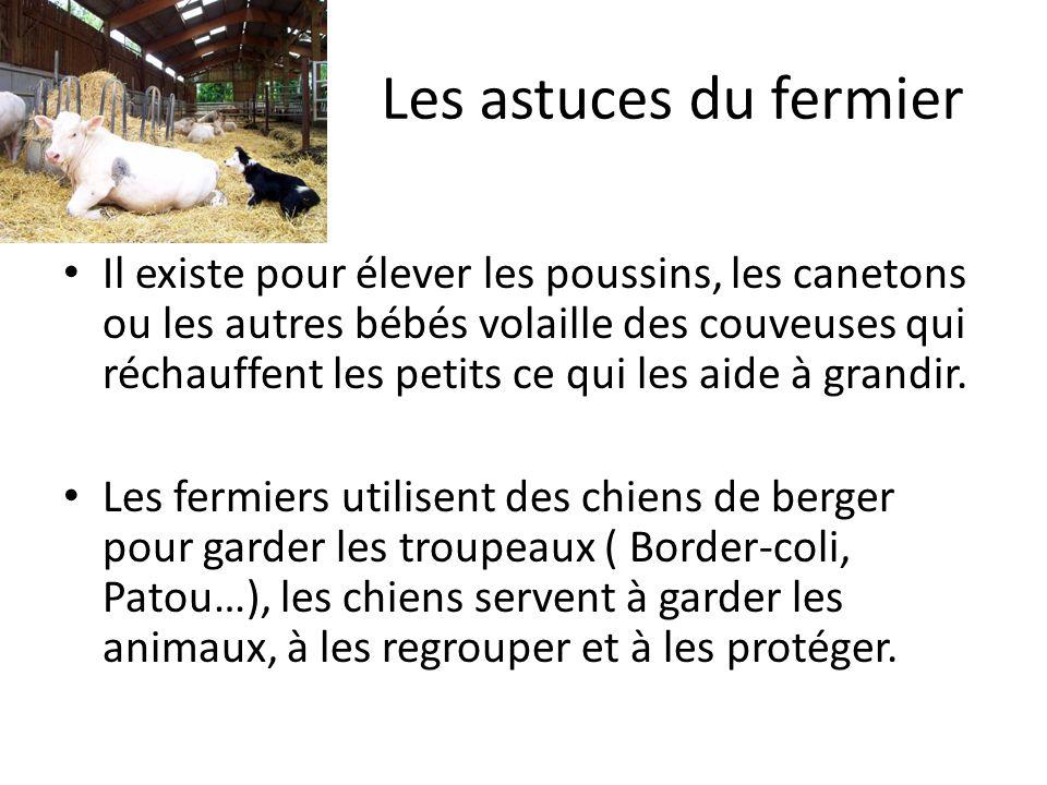 Les noms des bébés animaux Le lapereau (le lapins), le chevreaux (la chèvre), le poulain(le cheval), lagneau(le mouton), lânon( lâne), le veau (la vache),le caneton(le canard), le poussin (la poule), loison (loie), le pintadeau (la pintade), le porcelet (le cochon)…