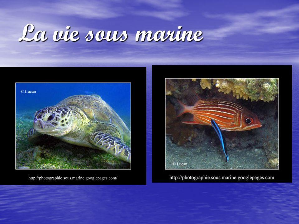 La vie sous marine