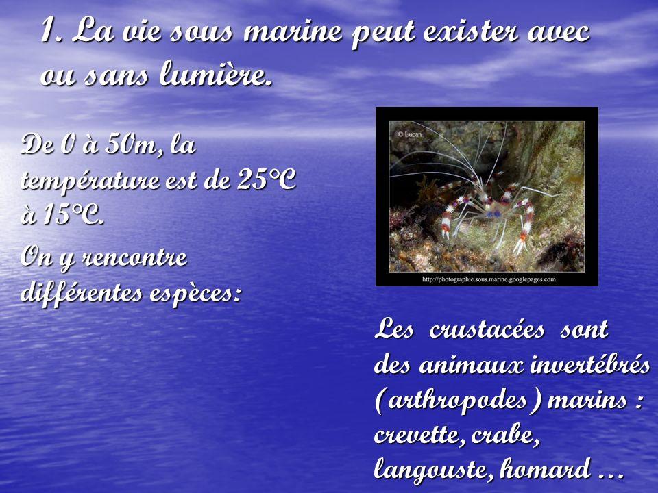 1. La vie sous marine peut exister avec ou sans lumière. De 0 à 50m, la température est de 25°C à 15°C. On y rencontre différentes espèces: Les crusta