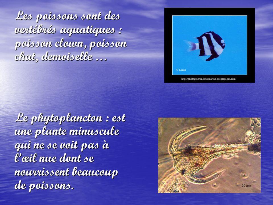 Les poissons sont des vertébrés aquatiques : poisson clown, poisson chat, demoiselle … Le phytoplancton : est une plante minuscule qui ne se voit pas